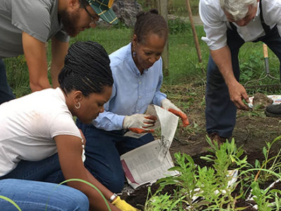 community planting the garden