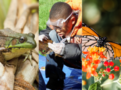 Collage of kayaker, frog, kid scientist, monarch butterfly, man holding fish