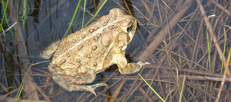 Toad photo