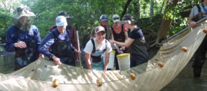 Volunteering-gathering fish with nets