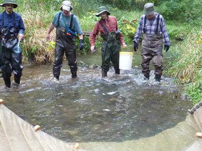 Volunteers using nets for fish surveying