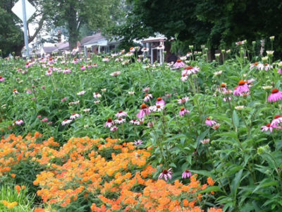 Native plants and pollinators shown in a suburban setting