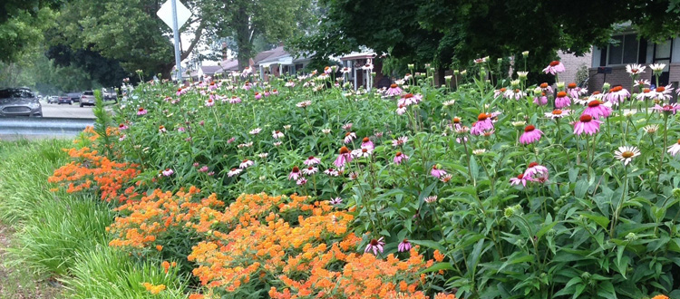 Native plants and pollinators shown in a suburban setting