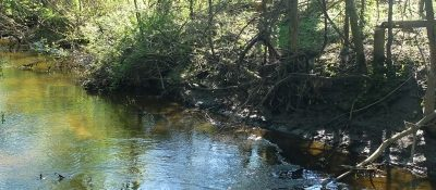 Johnson Creek