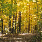 West Bloomfield Nature Preserve in the fall
