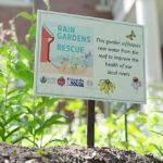 Rain Gardens to the Rescue video screen capture