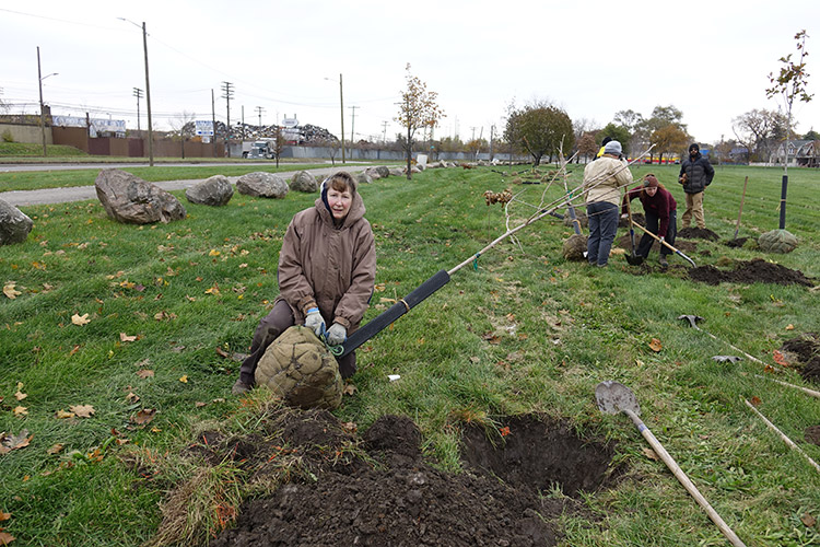 Citizen forester Elaine Piotrowski works to plant a tree in Patton Park, view facing north towards Dix Avenue