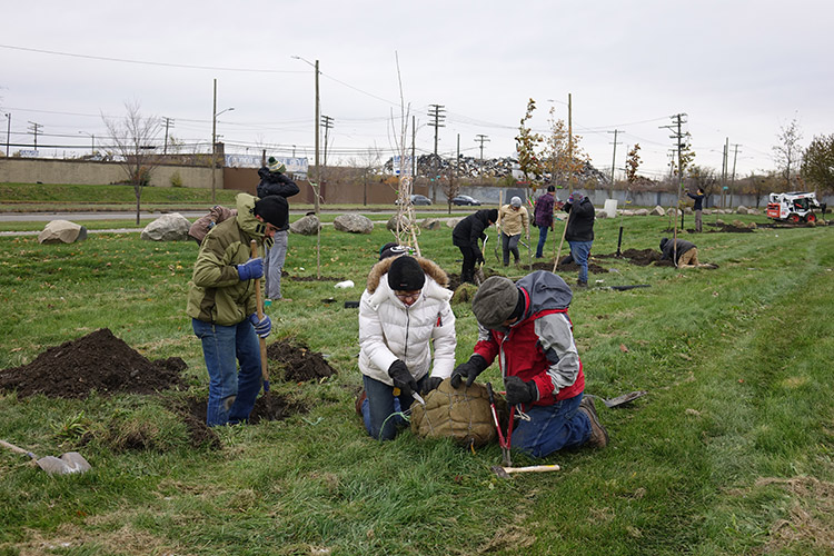 Citizen foresters Parker Jean, Lori Fagan and George Gomez work together to plant a tree in Patton Park, view facing north towards Dix Avenue