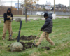 Greening of Detroit employees Chris Berry and Melvin Banks plant a tree in Patton Park, view facing north towards Dix Avenue