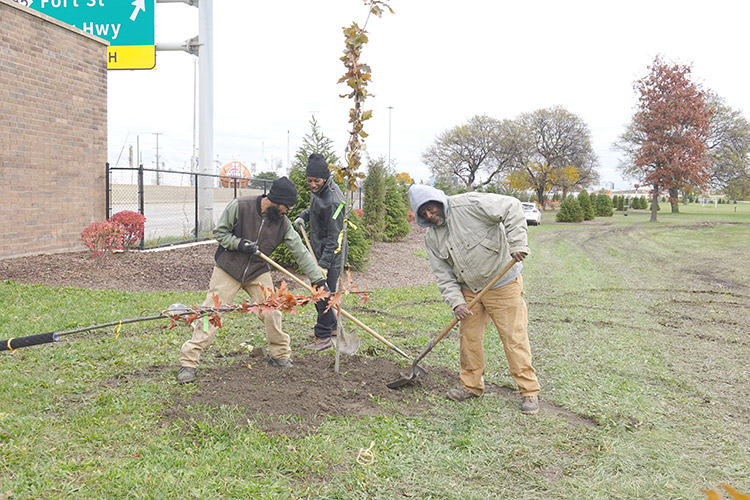 Greening of Detroit staff Melvyn Banks, Ayatallah el Amin, and Frank Anderson plant red oaks on the north side of Detroit's Kemeny Park, view facing northwest.