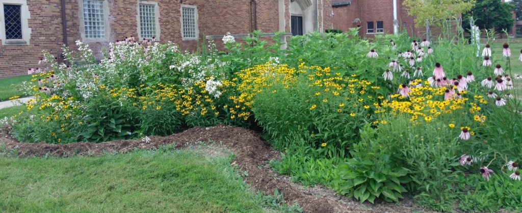 Rain Garden Consultation with FOTR expert