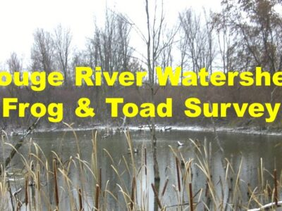 Rouge River Watershed Frog & Toad Survey