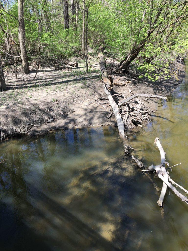 Muddy streambank