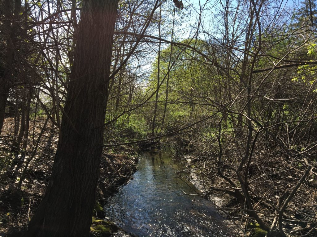 River photo with trees
