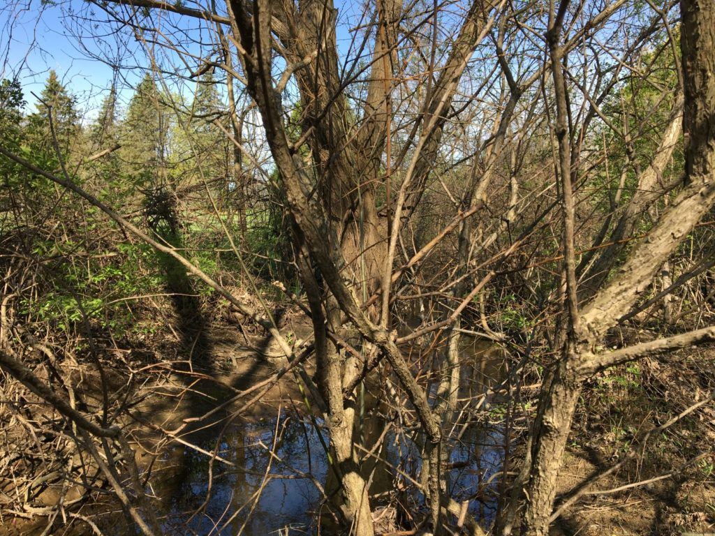 Trees with river behind