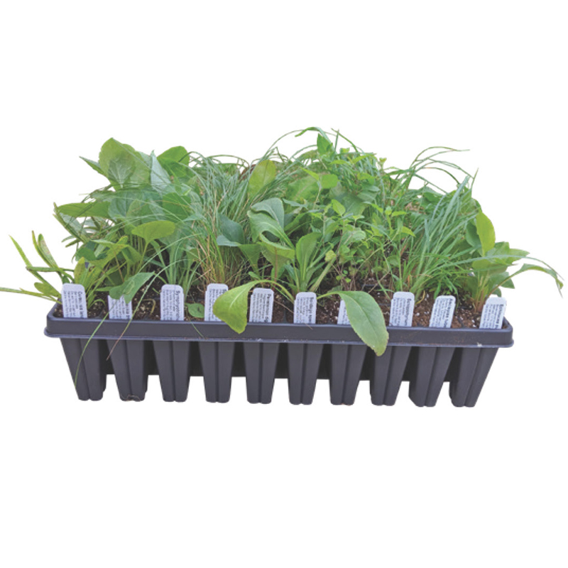 SHIPPED TO YOUR DOOR Native Plant Kits — 50 Plant Plugs (3