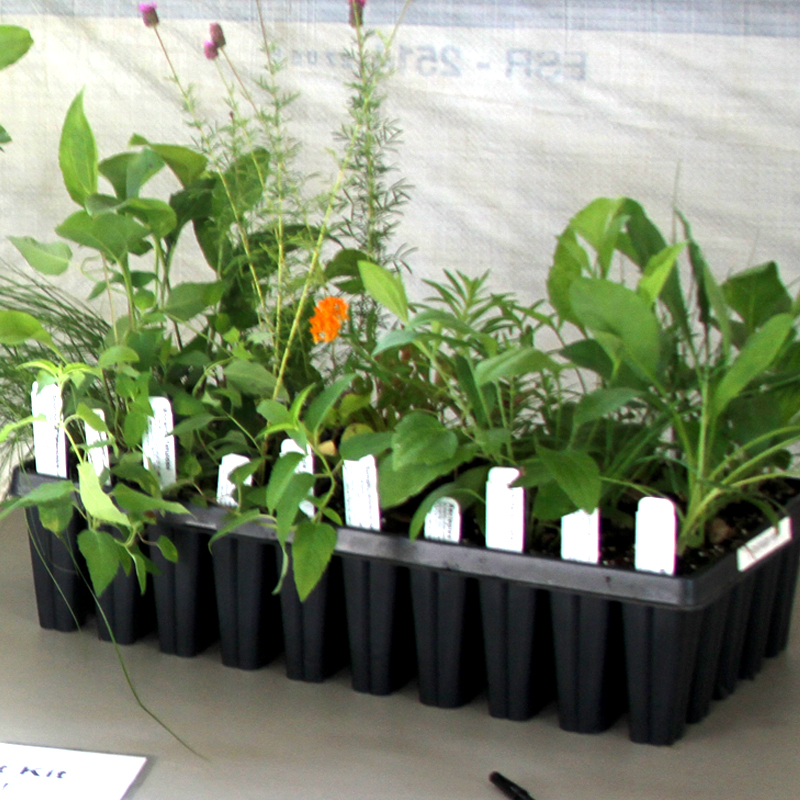 Plant Kits: Rain Garden, Butterfly, Bird, Pollinator, Prairie, Wetland, and Shade (50 plants)