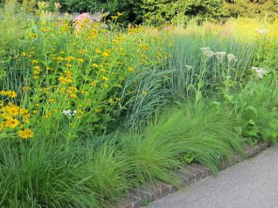 Native Plant border at Chicago Botanical Garden
